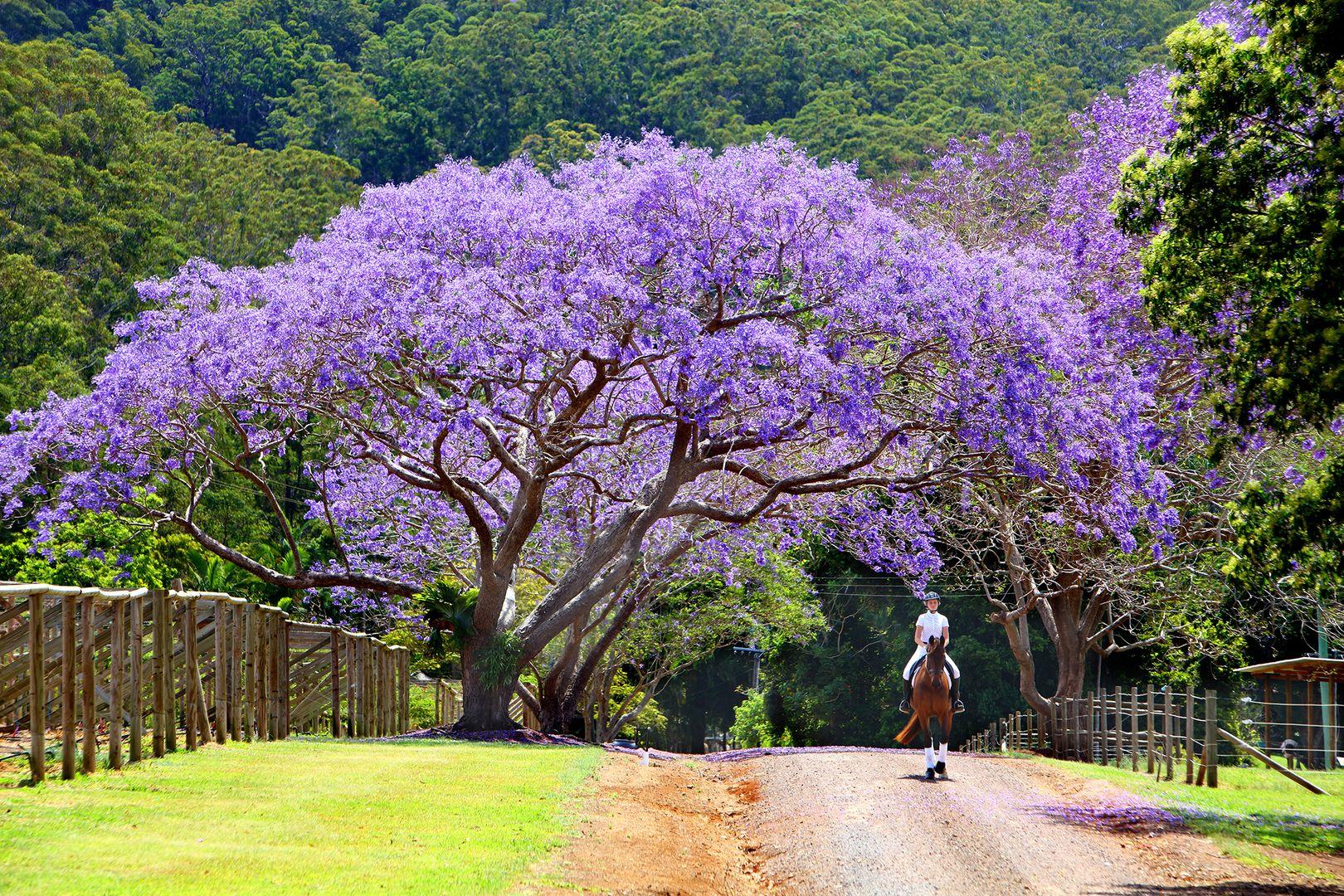 53 Shrapnel Road, Cooloolabin QLD 4560, Image 0