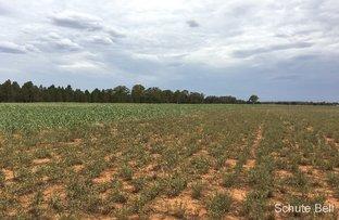 Picture of . 32L Dulcidene Rd, Terramungamine NSW 2830