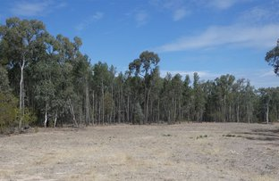 Picture of Lot 53 Ellersey Lane, Condamine QLD 4416
