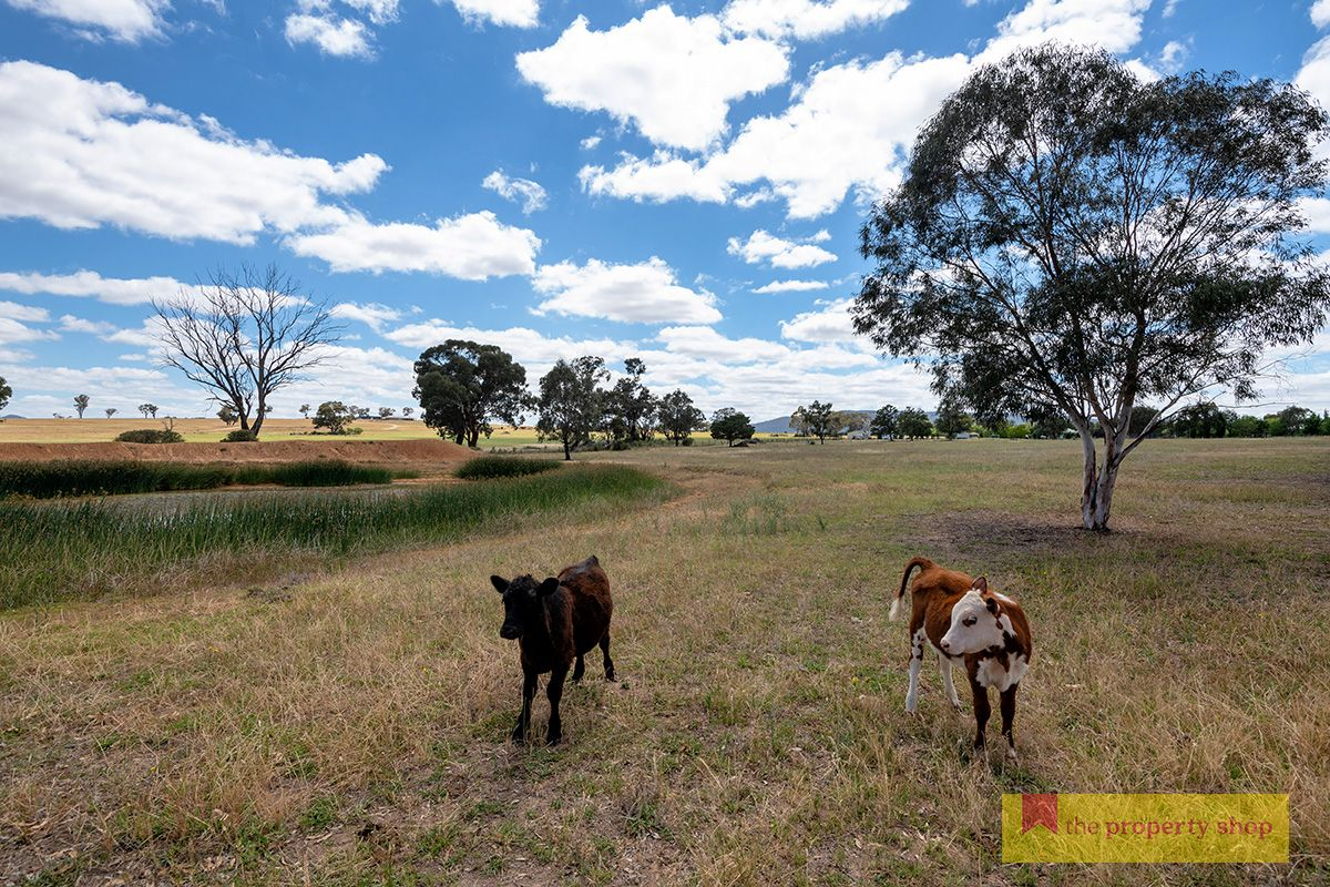 36 Tinja Lane, Mudgee NSW 2850, Image 0