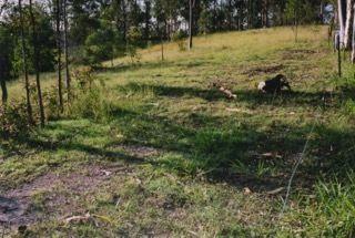 111 North Deep Creek Road, North Deep Creek QLD 4570, Image 2