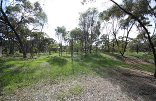Lot 678 Pitt Street, Pingelly WA 6308