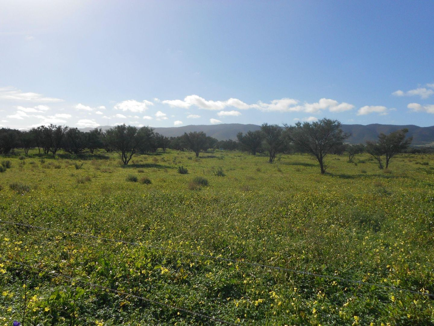Lot 181 Government Road, Napperby SA 5540, Image 1