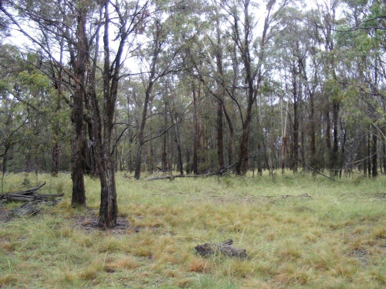 Lot 7/1000 Tablelands Road, Red Range NSW 2370, Image 1