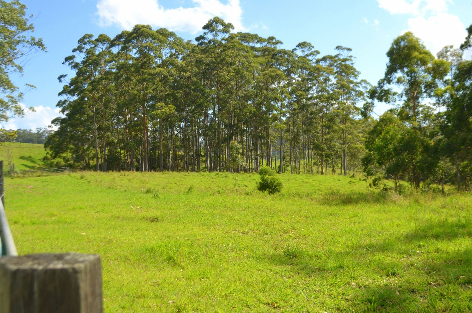 Lot 1 Willett Road, Bellthorpe QLD 4514, Image 0