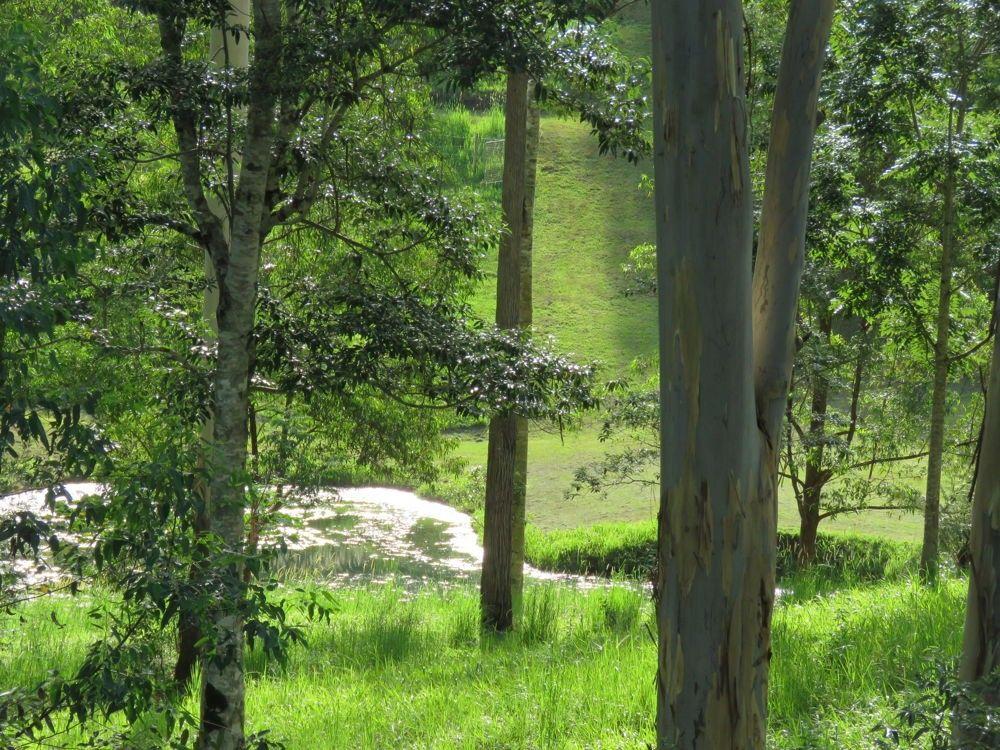 707 Bellingen Road, Missabotti NSW 2449, Image 1