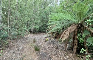 Picture of 455 Mountain Road, Lilydale TAS 7268