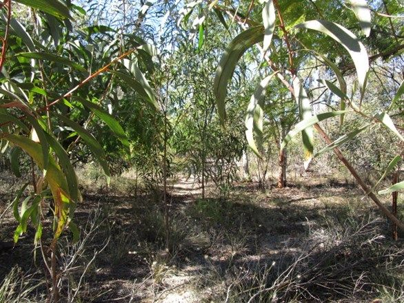 LOT 26 TARA CHINCHILLA ROAD, Tara QLD 4421, Image 2