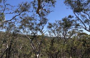 Picture of 77-79 Bullaburra Road, Bullaburra NSW 2784