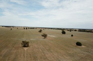 Picture of 'Ossory' Aggregation, Narromine NSW 2821