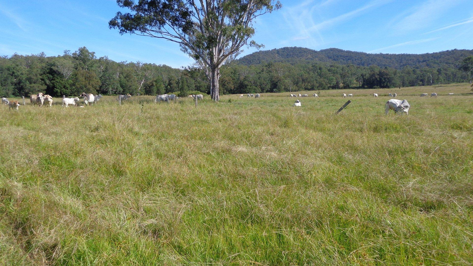 Grafton NSW 2460, Image 0