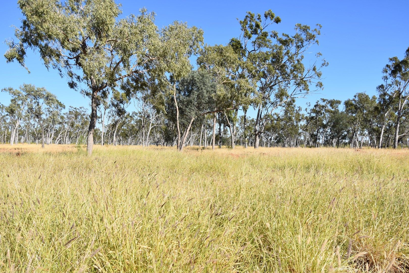 Landsborough Highway, Barcaldine QLD 4725, Image 0