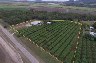 Picture of 892 Ayr Dalbeg Road, Mount Kelly QLD 4807