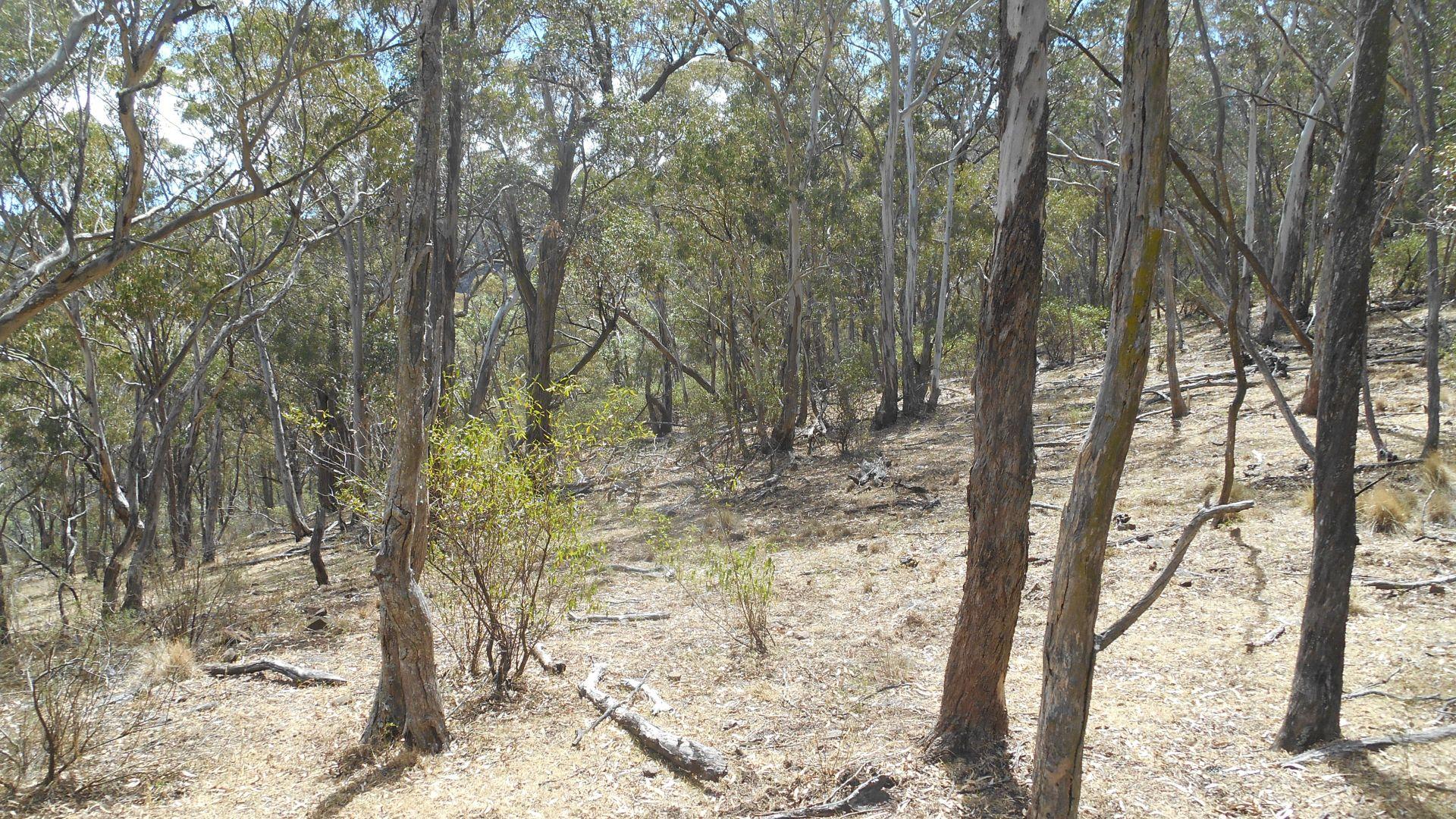 Lot 220 via Roma Road, Merriwa NSW 2329, Image 1