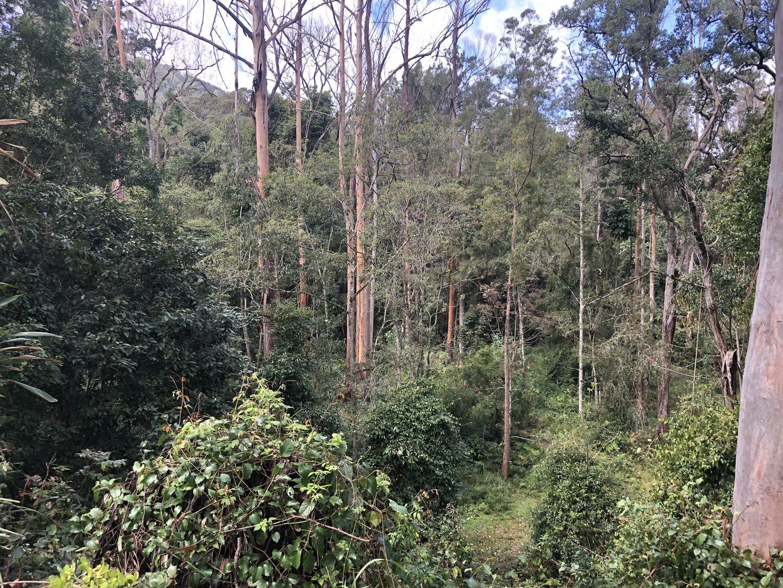 530 Sawpit Creek Road, Kyogle NSW 2474, Image 1