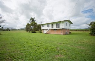 Picture of 242 Mt Martin Loop Road, Mirani QLD 4754
