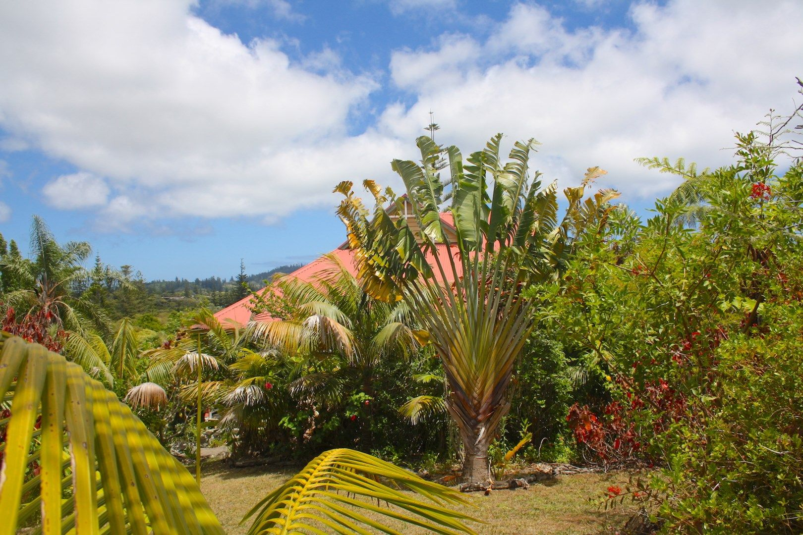 148A Taylors Road, Norfolk Island NSW 2899, Image 0
