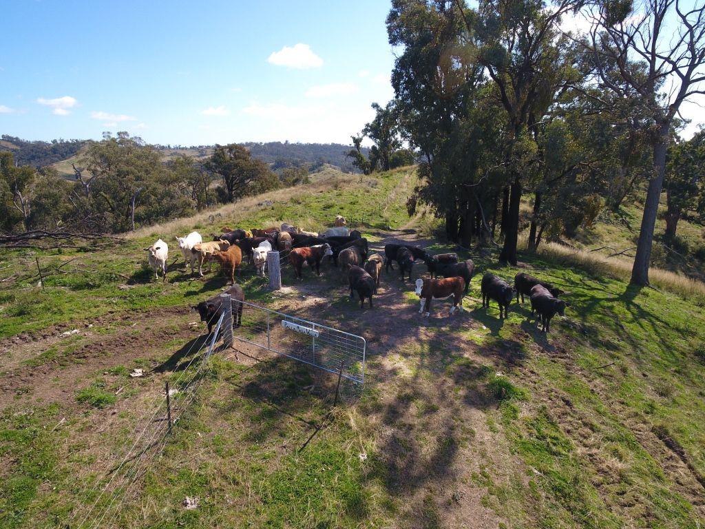 """Coghlan"", 3108 Limbri-Weabonga Road, Tamworth NSW 2340, Image 2"