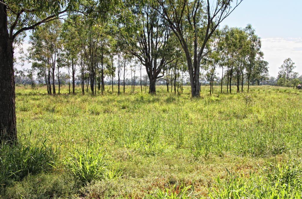 43276 Burnett Highway, Jambin QLD 4702, Image 2