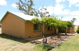 Picture of 644 Golf Course Road, Bordertown SA 5268