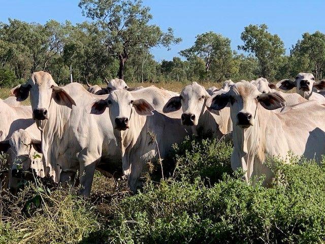 3661 Bulleringa Road, Fossilbrook QLD 4871, Image 1