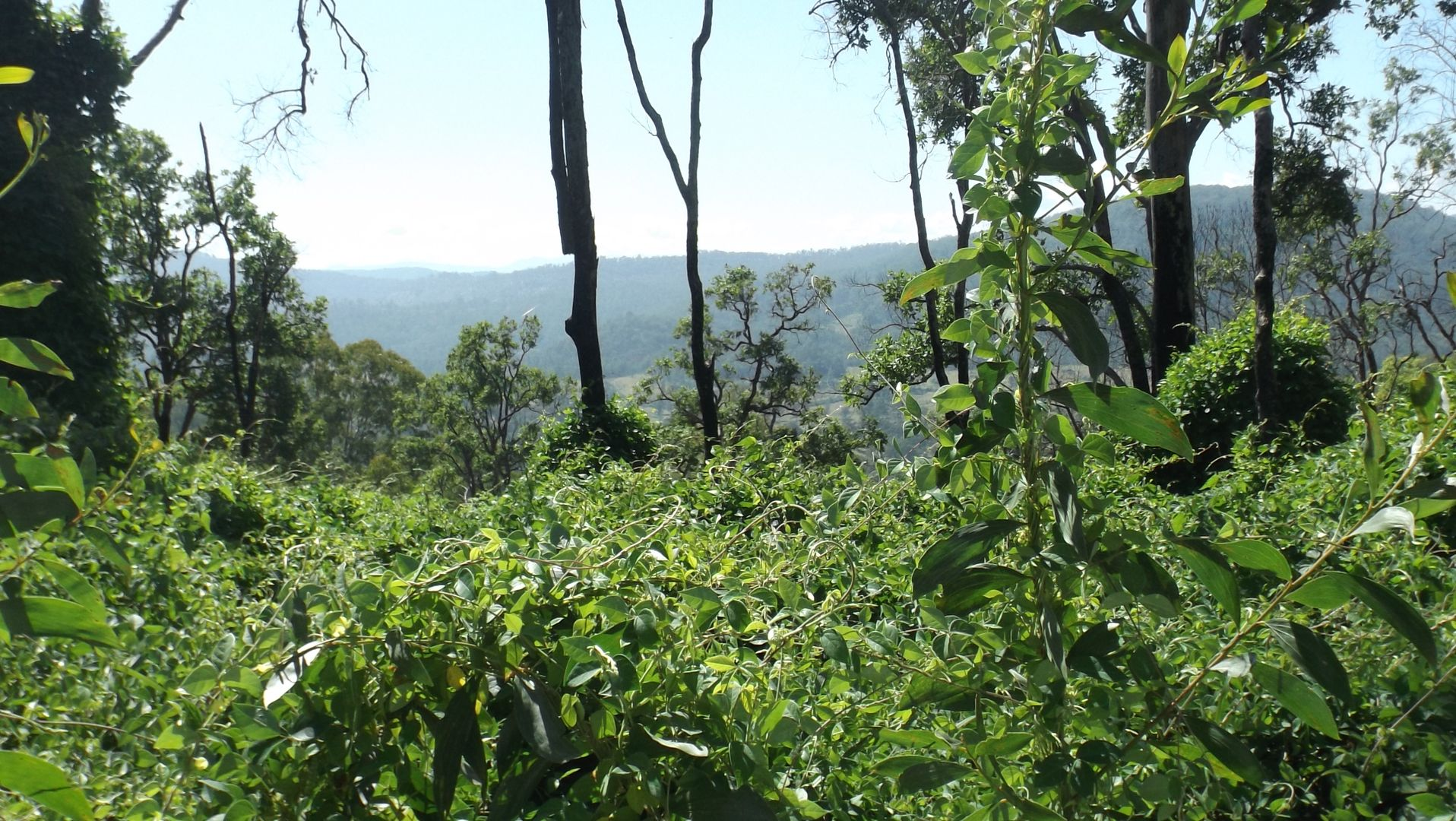 1464 Paddys Flat Road, Tabulam NSW 2469, Image 1