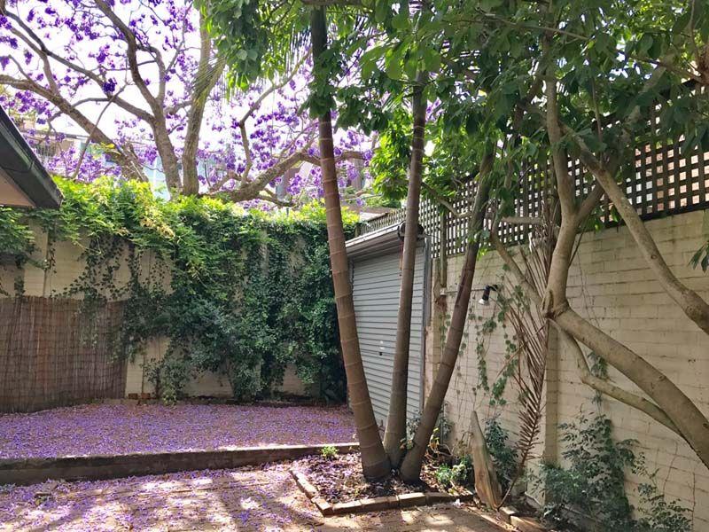 3 Alton Street, Woollahra NSW 2025, Image 2