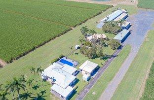 Picture of 565 Homebush Road, Sandiford QLD 4740