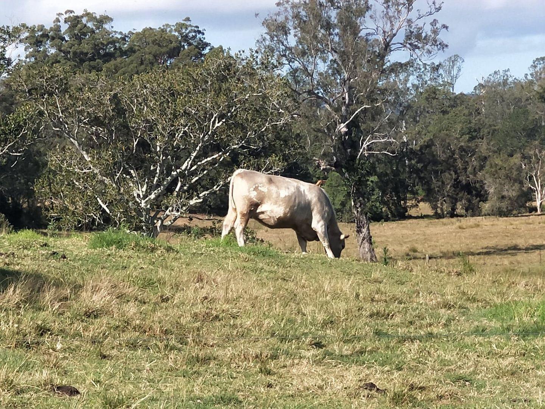 17-139 Kropp Road, Woodford QLD 4514, Image 0