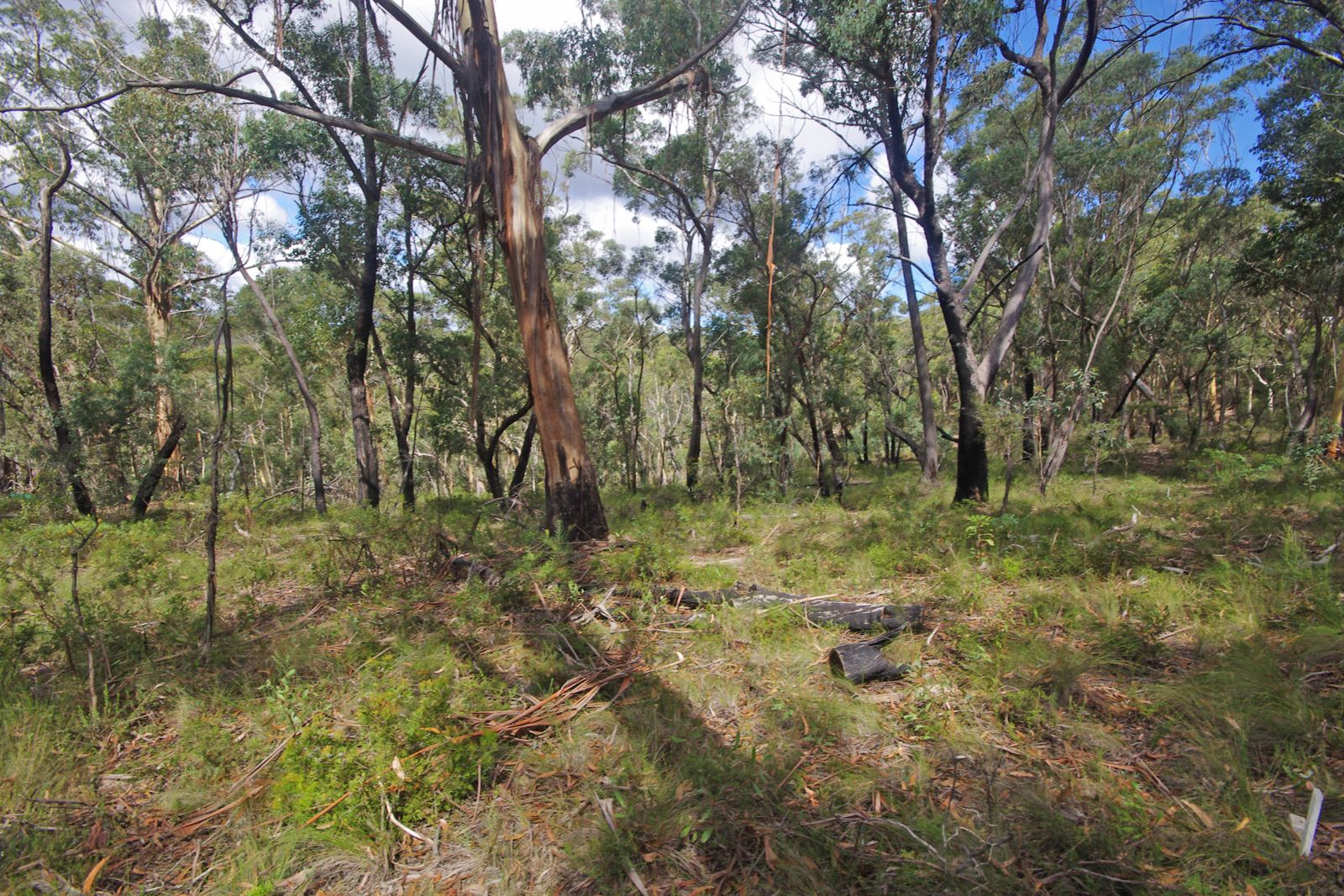 17 Chatsworth Rd, Mount Victoria NSW 2786, Image 1
