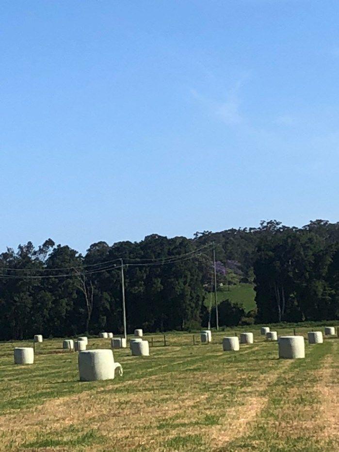 Dorrigo NSW 2453, Image 2