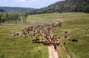 Picture of Sardine Creek Yellowbank Road, Injune QLD 4454