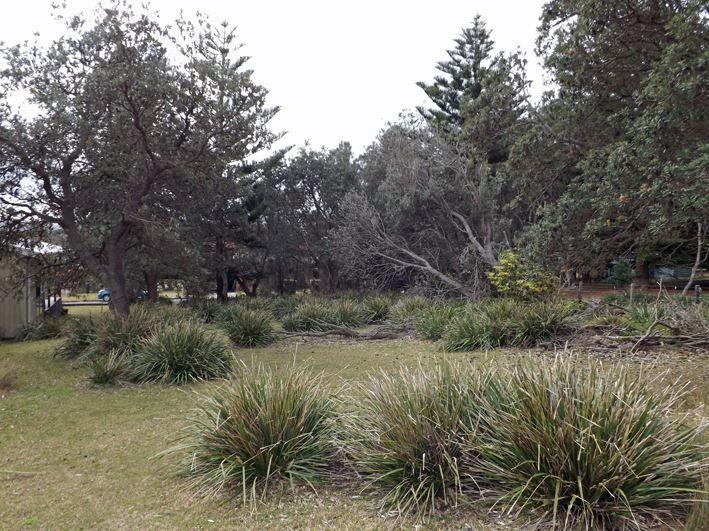 71 Kurrawa Drive, Kioloa NSW 2539, Image 0