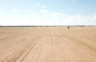 Picture of Pett's Block, Pineview Road, Narromine NSW 2821