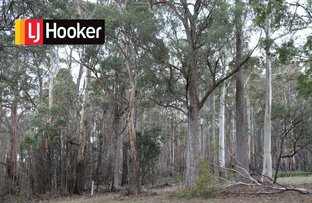 Picture of Lot 1 Gardiners Creek Road, St Marys TAS 7215