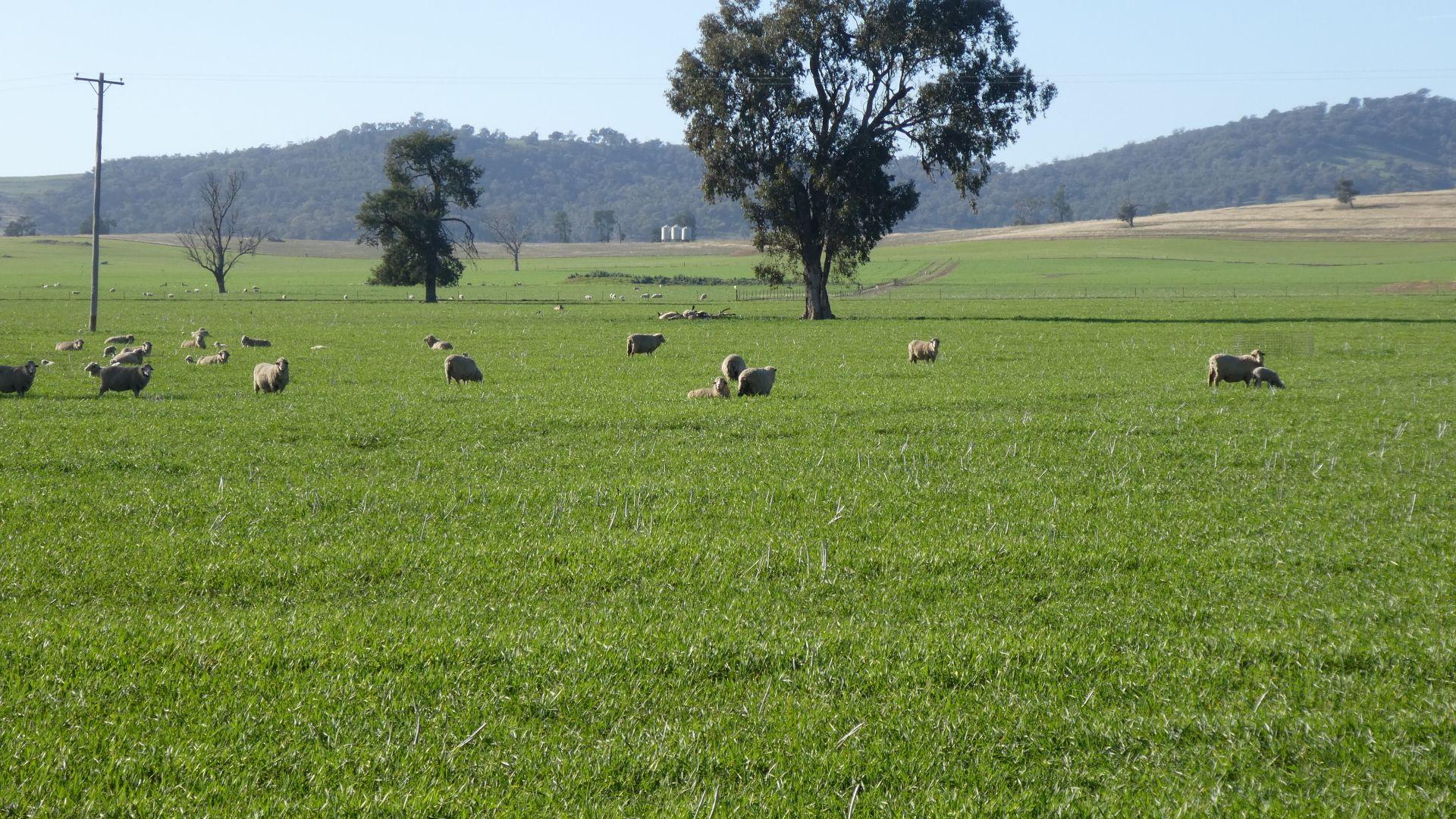 644 Mcrories Lane, Wagga Wagga NSW 2650, Image 1