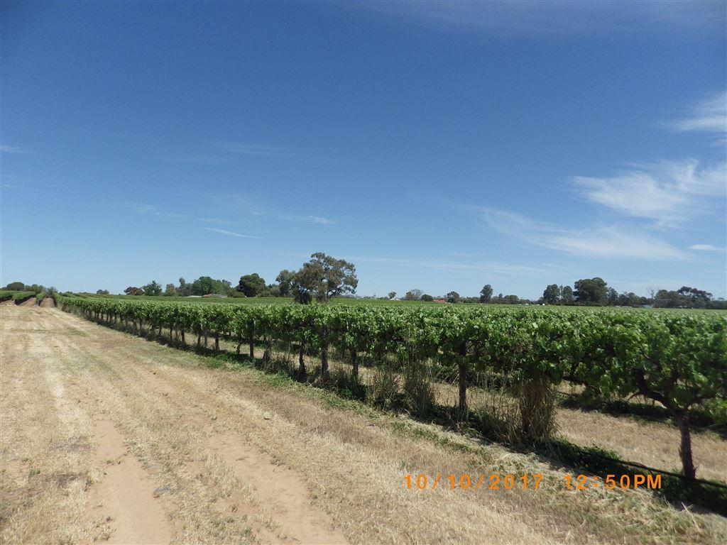 296 & A113 McKenzie  & Brand Roads, Barmera SA 5345, Image 1