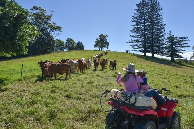 Picture of 1150 Mount Mee Road, MOUNT MEE QLD 4521
