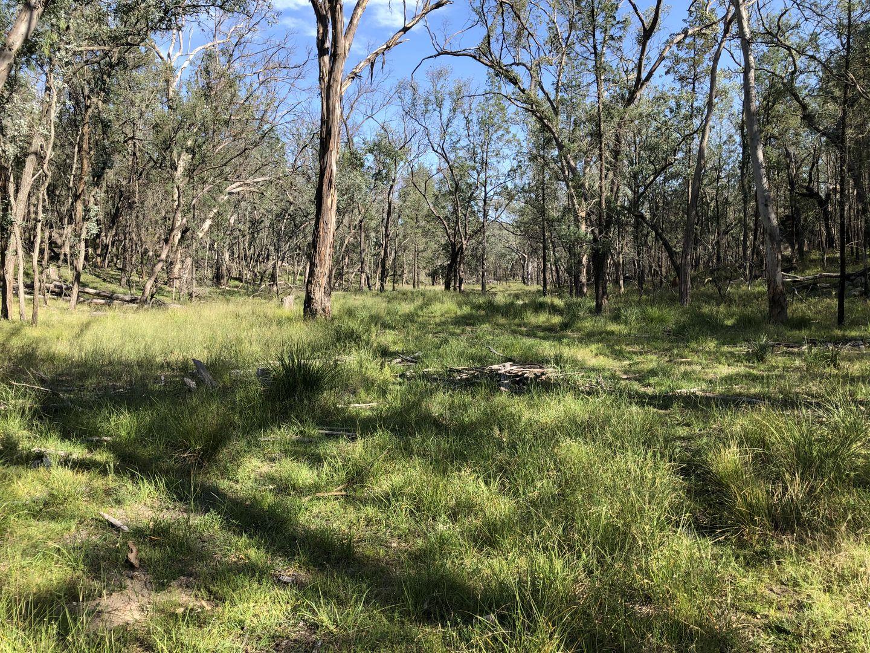 444 Wallangra Road, Ashford NSW 2361, Image 0