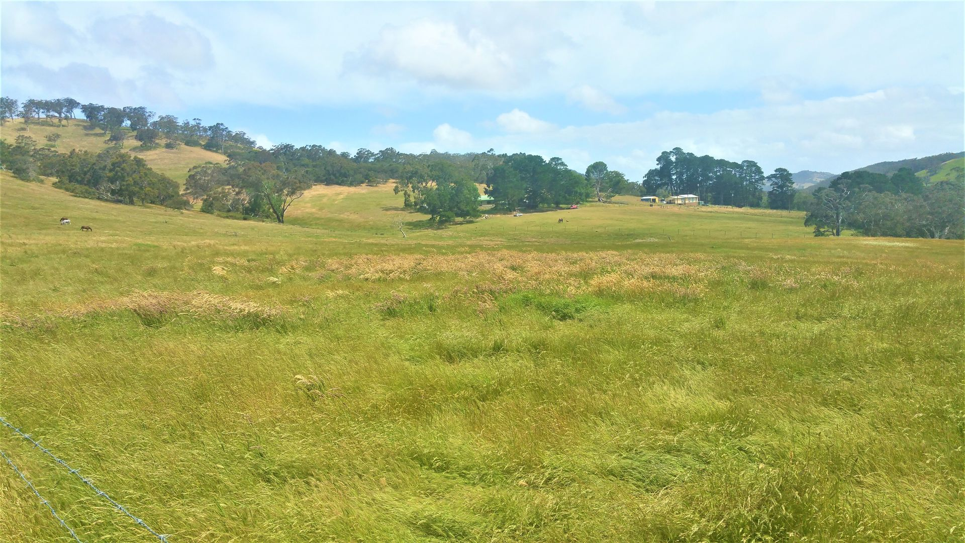 749 Blackfellows Creek Road, Kuitpo Colony SA 5172, Image 0