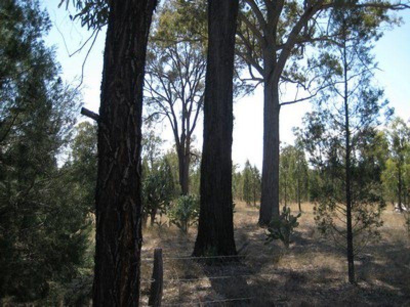Rauchle Road, Stonehenge QLD 4357, Image 1