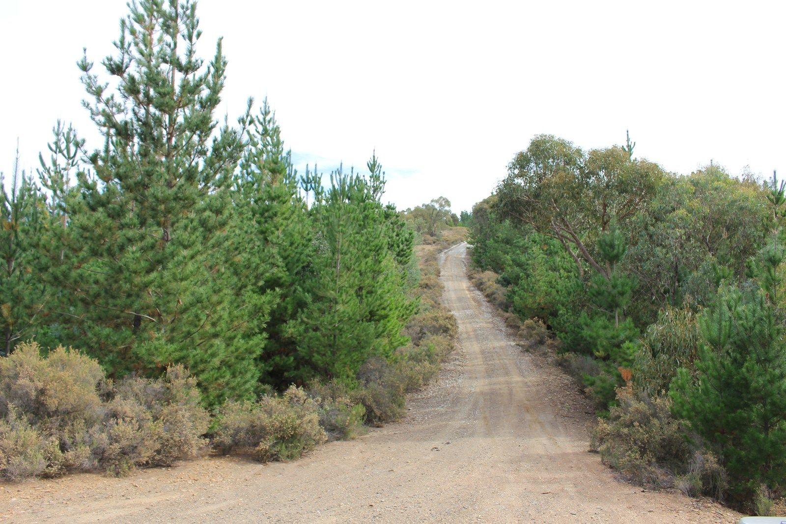 Fitzgeralds Valley NSW 2795, Image 2
