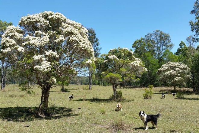 Picture of 465 Ellangowan Myrtle Creek Road, ELLANGOWAN NSW 2470
