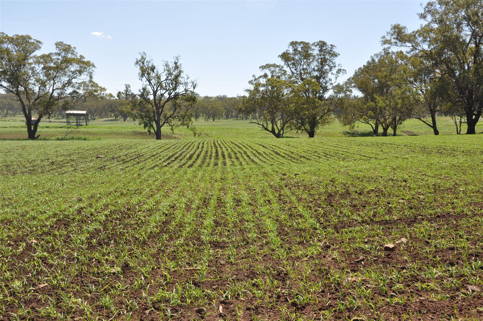 705 Coolah Rd, 'Culbara', Cassilis NSW 2329, Image 1