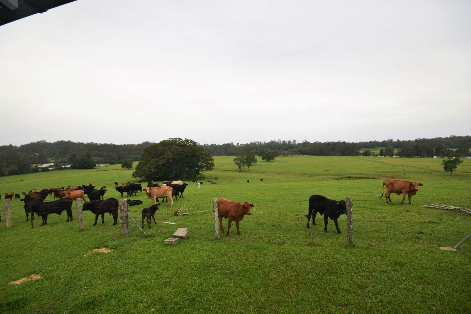 422 Wilson Road, Congarinni North NSW 2447, Image 1