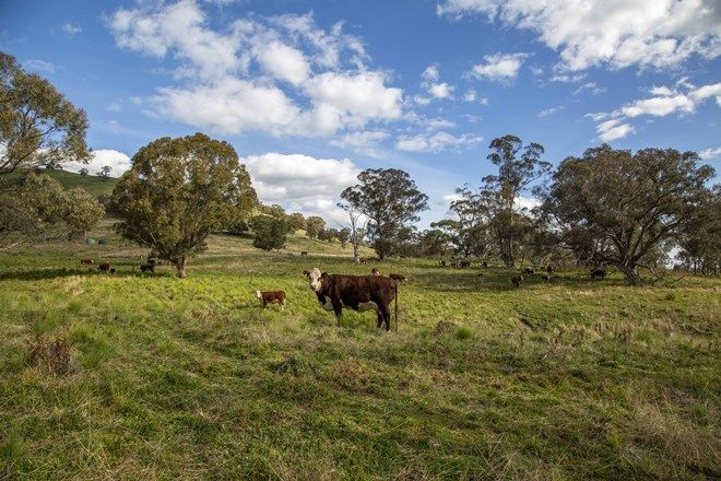 Picture of 1479 Coolah Creek Road, COOLAH NSW 2843