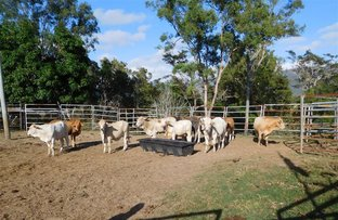 Picture of 7733 Bruce Highway, Bloomsbury QLD 4799