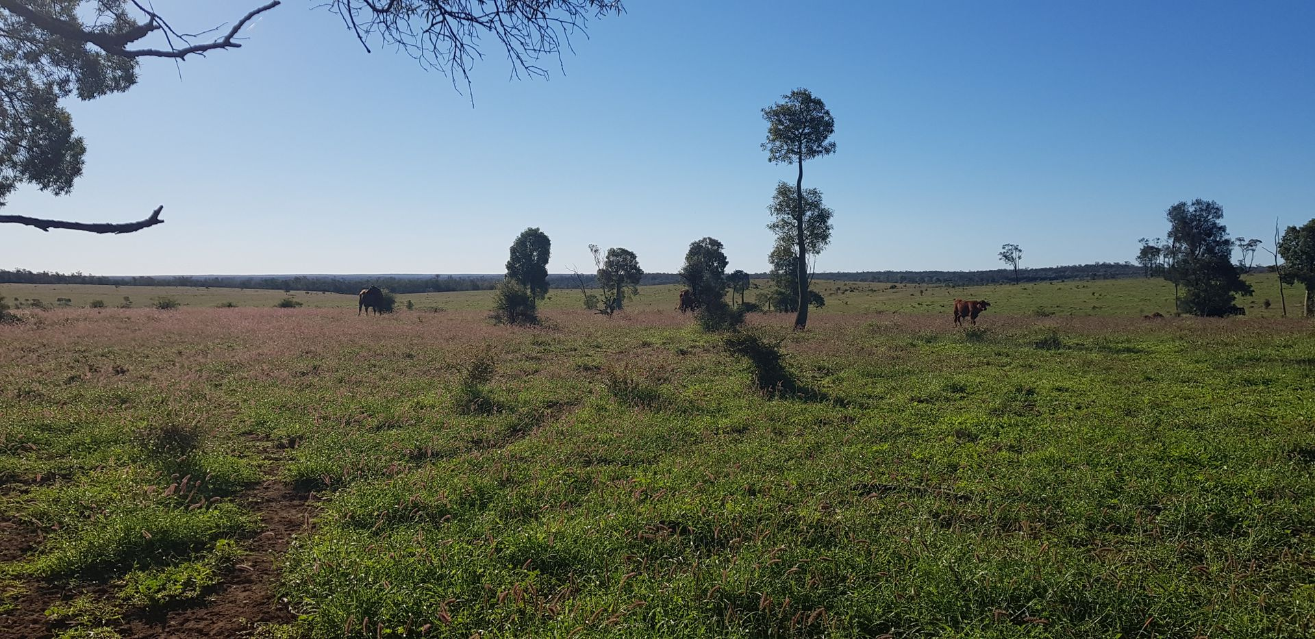 .. Mount Owen Road, Mitchell QLD 4465, Image 1