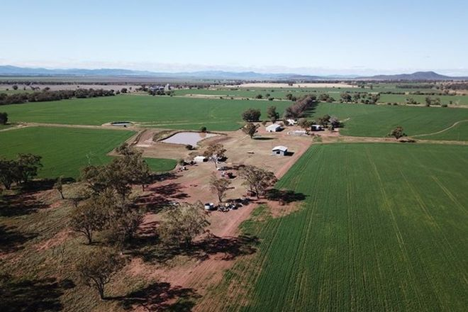 Picture of 70 Nea Siding Road, CURLEWIS NSW 2381