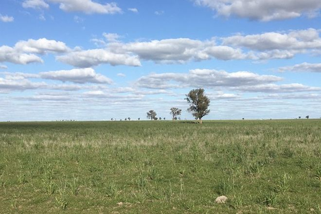 Picture of - Watchem - Corack Road, WATCHEM VIC 3482